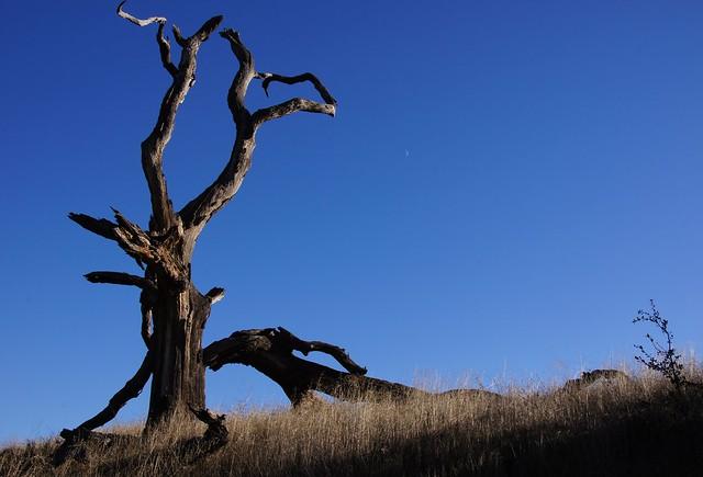 Blue Skies Over Bad Lands