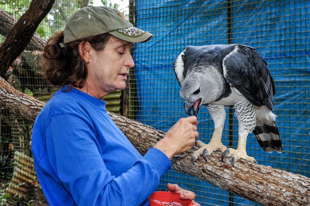 2010-12-27 TBZ-161 Sharon Matola feeding The Zoo's male Harpy Eagle