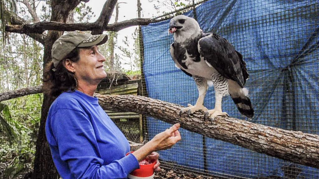 2010-12-27 TBZ-232 Sharon Matola feeding The Zoo's male Harpy Eagle (etract-1)