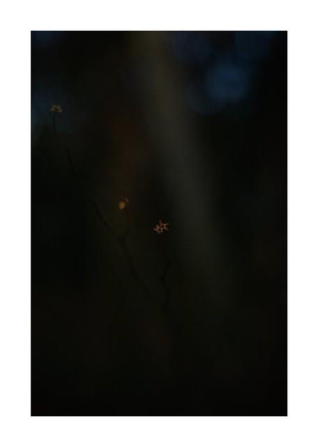 2021/1/25 No. 11/30 -  SONY ILCE‑7M2 / Lomography New Jupiter 3+ 1.5/50 L39/