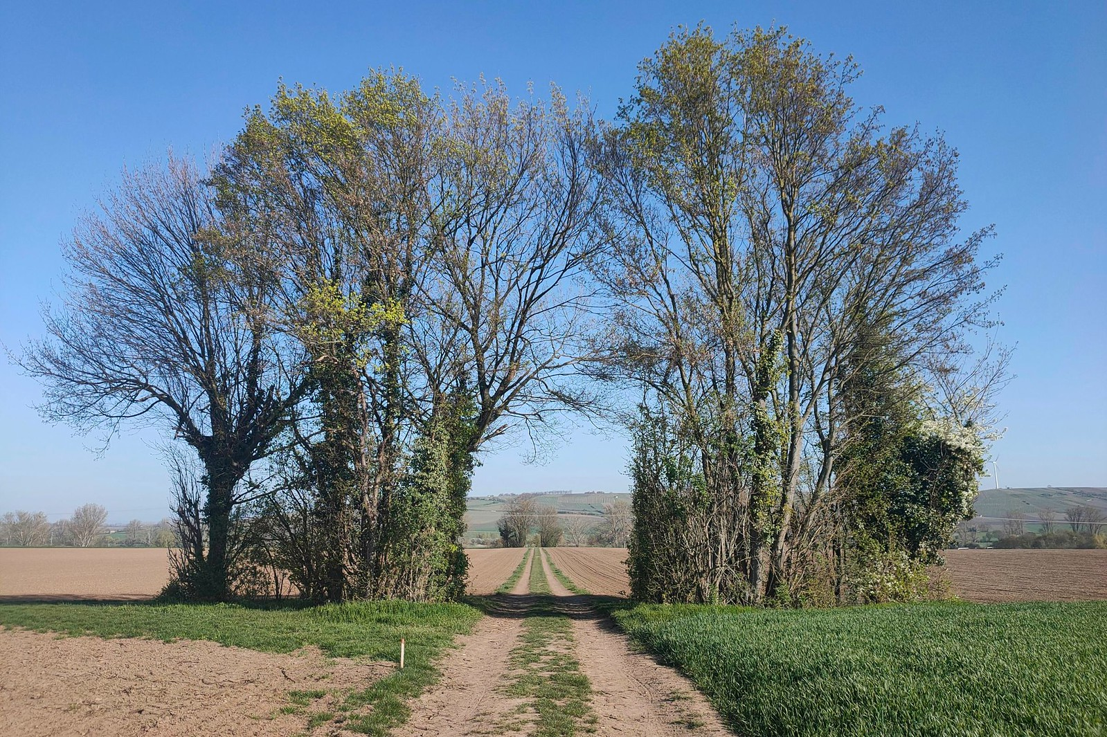 Torbogen aus Bäumen im Selztal