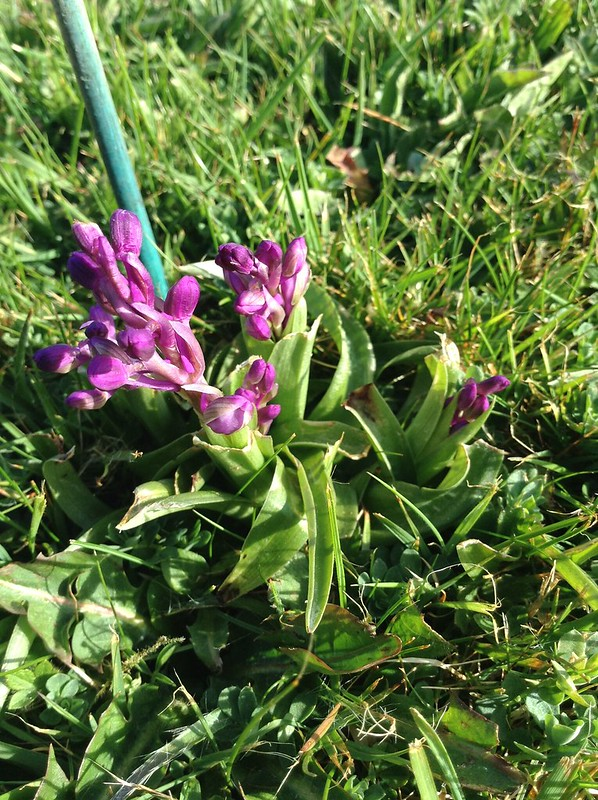 Spring colours: Green, blue, yellow, pink & purple - Orchids