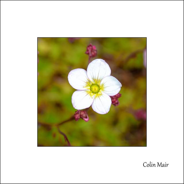 Garden Flower - (Tamron 80-250mm, f7.1, Macro) - 2021-04-18th
