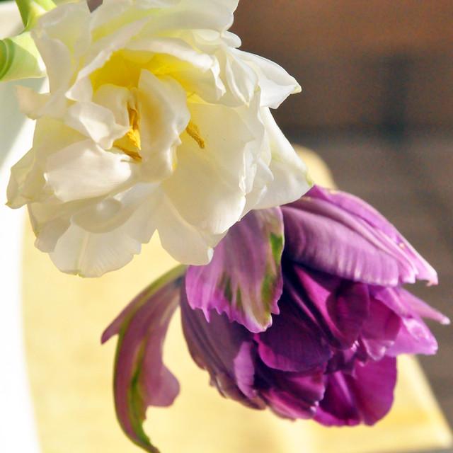 April 2021 ... Blüten meines Tulpenstraußes ... Brigitte Stolle