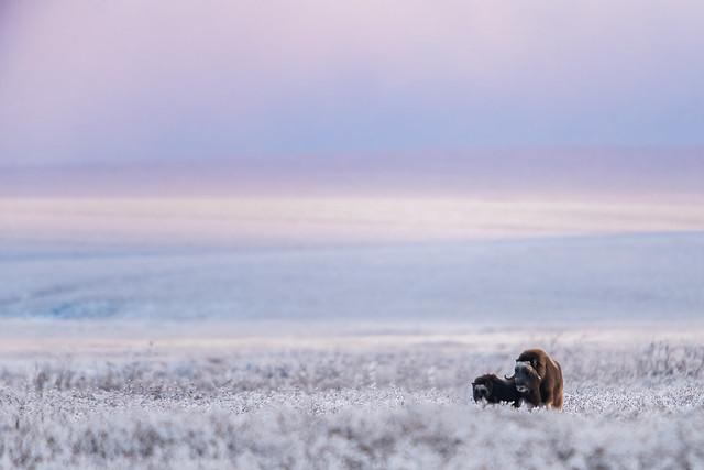 Arctic Pastels