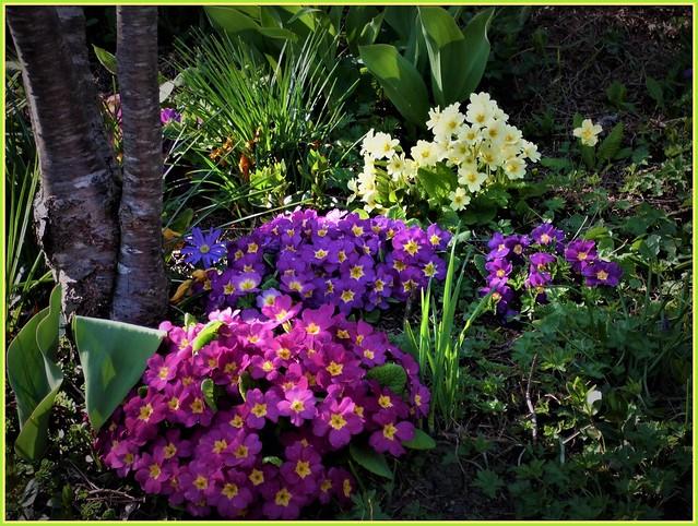 🌞💜Bunter Frühlingsgruß🍃🌺🍃- Wünsche Euch allen ein sonniges Frühlingswochenende 🍀🙋♀️