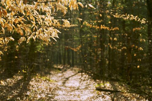 bokeh path trees leaves shadows
