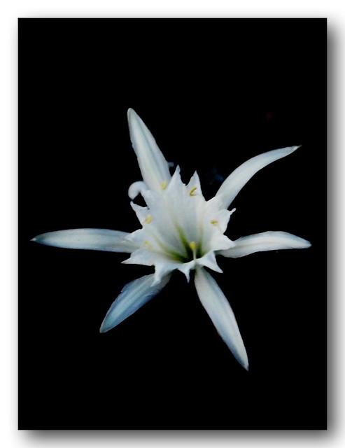 Black and White......Ayia Napa.....Cyprus
