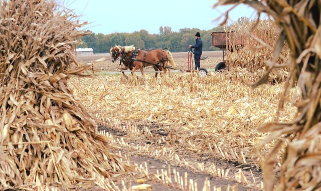 Amish Farming -- Central Illinois  (Explore)