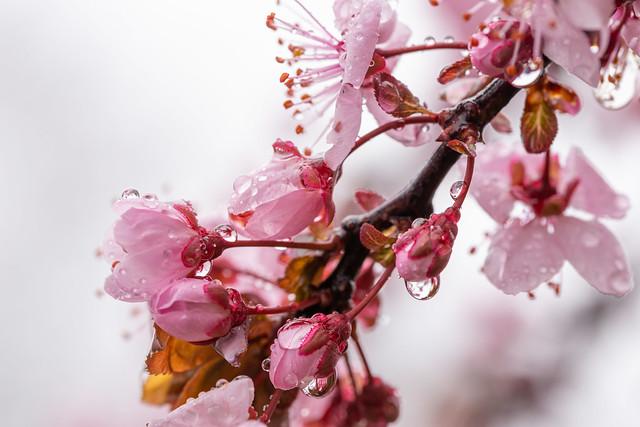 Wet in Spring