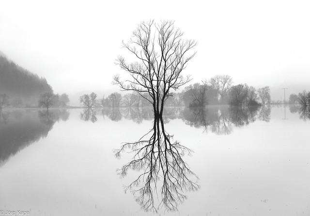 Allein im Hochwasser S/W 7 Alone in the flood B&W