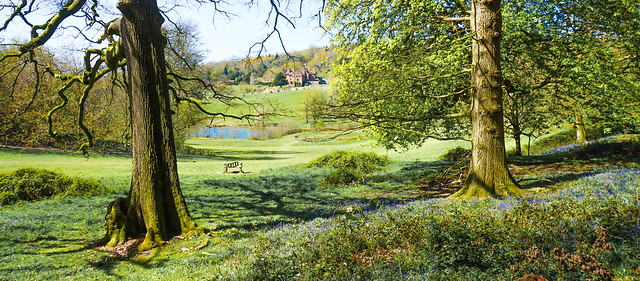 A view from the bluebell woods