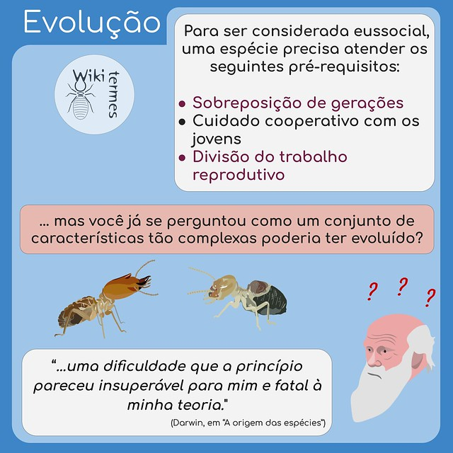 Eussocialidade (1)