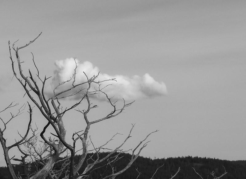 Cloudtree
