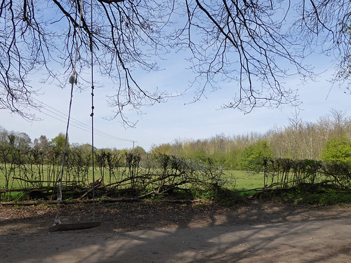 Woodland Swing