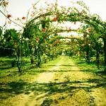 green path v2