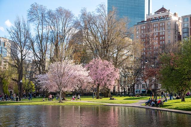 Boston Public Garden Spring