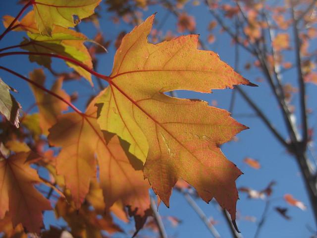 Gold and Orange Autumnal Tones