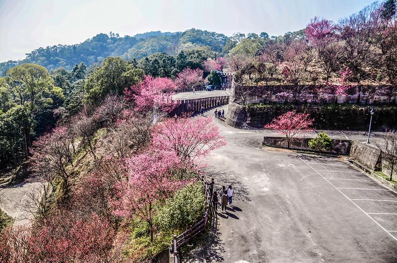 獅潭協雲宮 (133)
