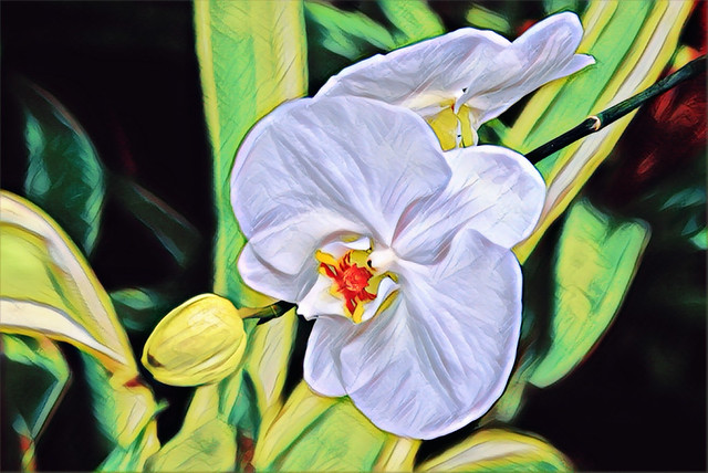 Toronto Ontario - Canada - Allan Gardens Conservatory - Toronto Tropical Garden -  Heritage - White Orchids