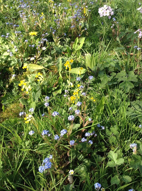 Spring colours: Green, blue, yellow, pink & purple - Cowslips, Forget-Me-Nots & Lady's Smock
