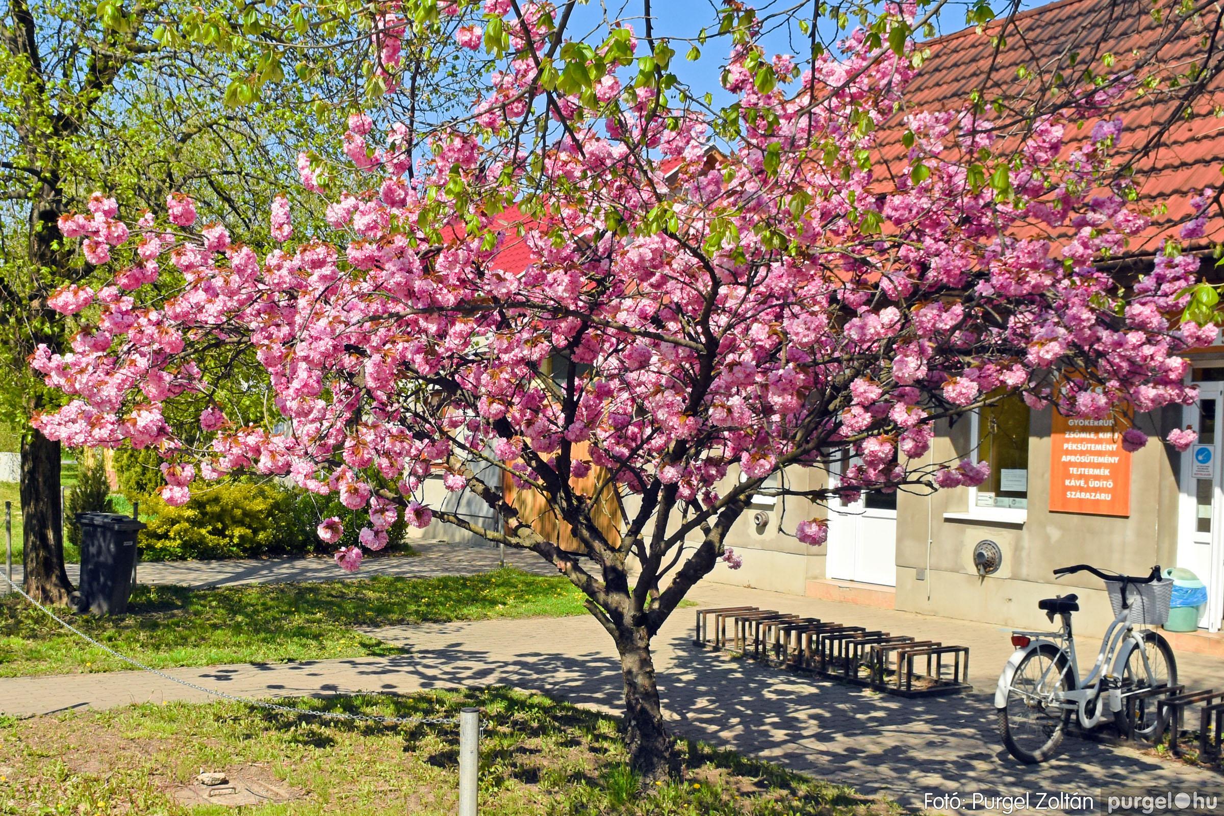 2021.04.24. 004 Tavaszi körkép - DSC_4228q - Fotó:PURGEL ZOLTÁN©.jpg
