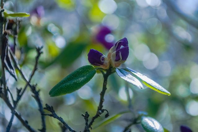 Botanical Garden. в Ботаническом саду Латвийского университета DSC_1583
