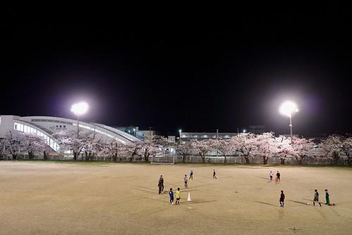 内野の夜桜 2021 2