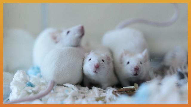 World Day For Laboratory Animals