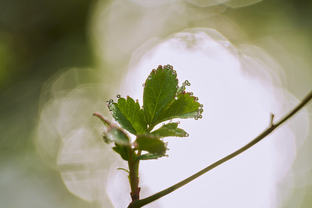 028900a- A Macro Morning In Aman Park - The Creator's Art