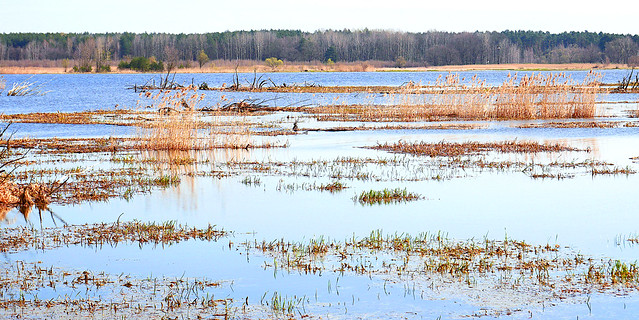 Rushes and wetlands II