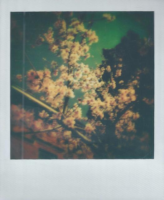 Spring Polaroid Week 2021: Spring Flowers