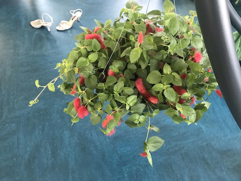 floof plant