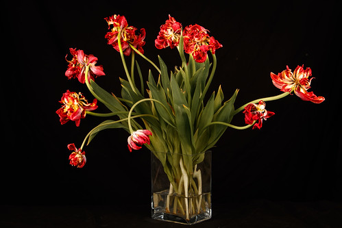 Tulpen in verval