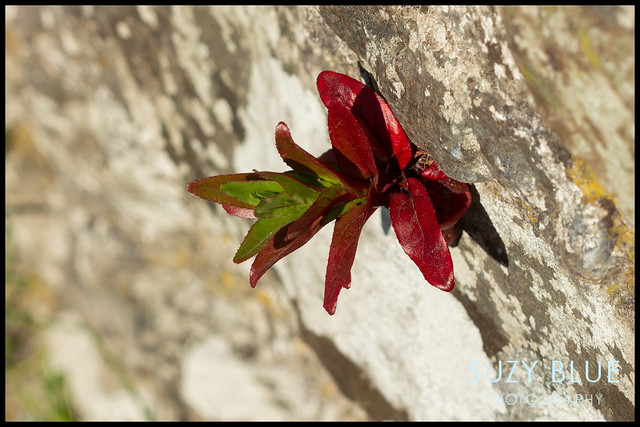 Interesting plant growing in wall