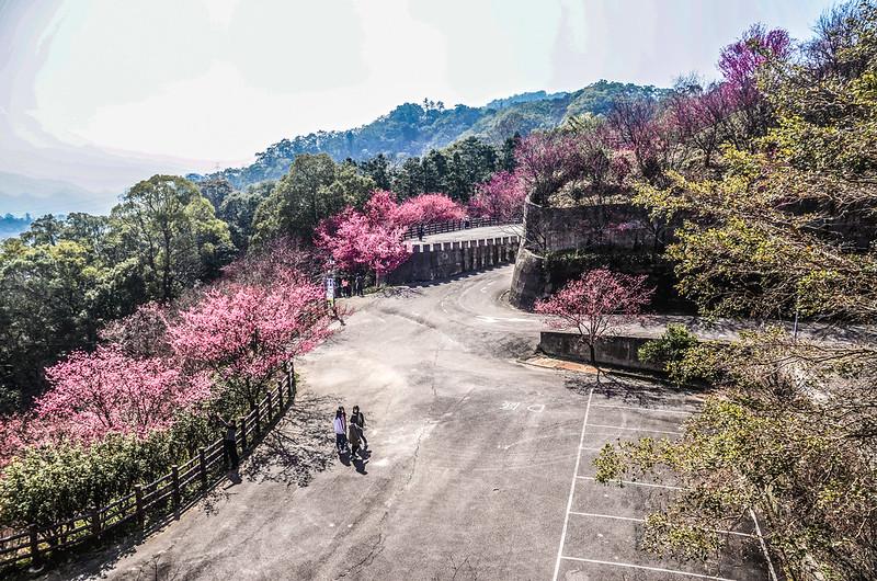 獅潭協雲宮 (138)