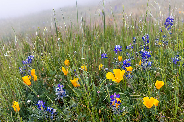 Spring Wildflowers in the Fog