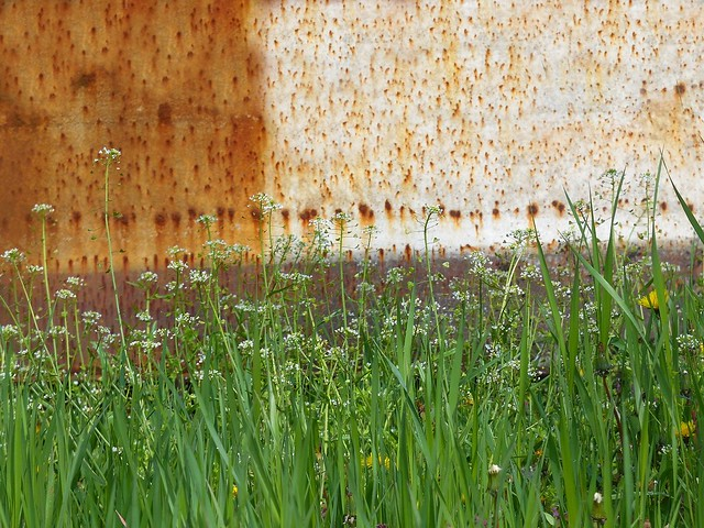 April Grass