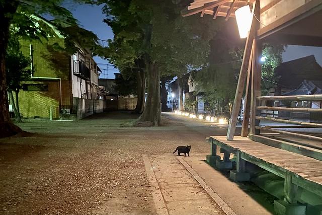 Today's Cat@2021−04−24
