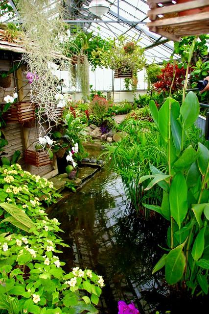 Toronto Ontario - Canada - Allan Gardens Conservatory - Toronto Tropical Garden -  Cluster of Beautiful Flowers