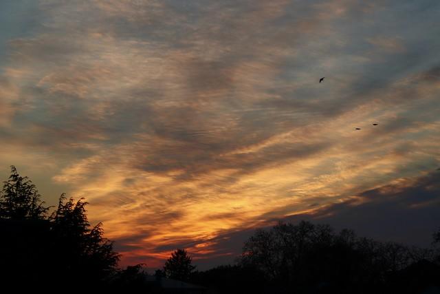 Bonn. Sonnenuntergang