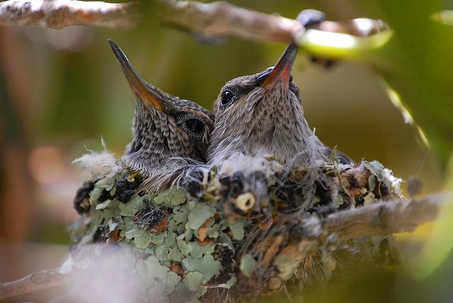 Hummingbirds April 2021