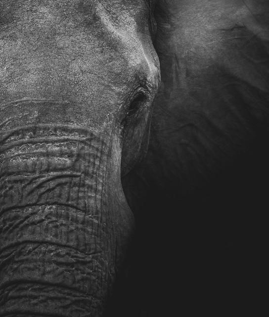 elephant by geran-de-klerk-FhbyES4BjG8-unsplash