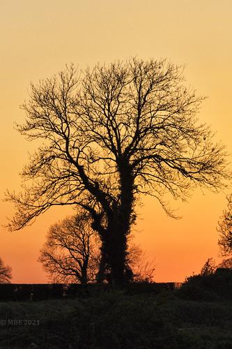 sunset silhouette ireland eire canon eos 80d 2021 tree orange mbe april spring kildare