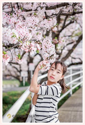 桜の花と大人びた女の子
