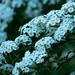Garden Flowers_-5.jpg