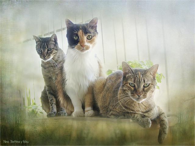 Nino, Bettina y Mau...