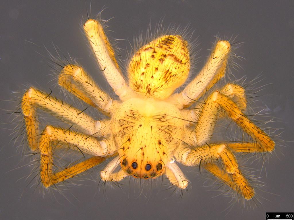 1a - Araneae sp.
