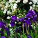 Garden Flowers_-7.jpg