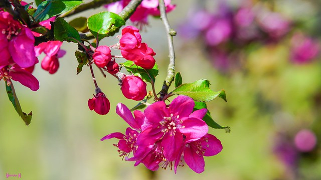 9663 - flowers